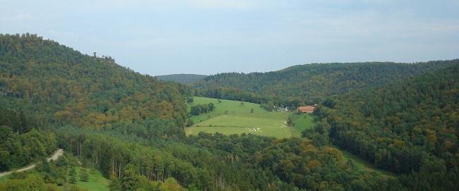 Vue depuis le sommet du Chateau sur la forêt